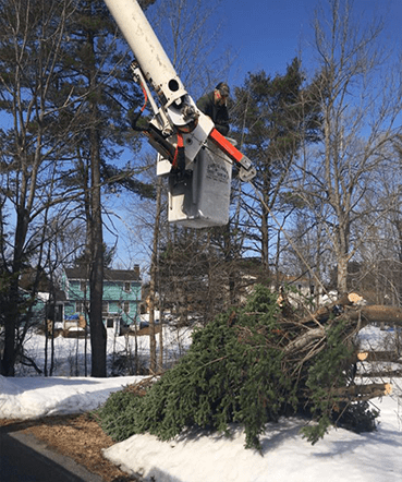 Capital Area Tree Service has bucket trucks.