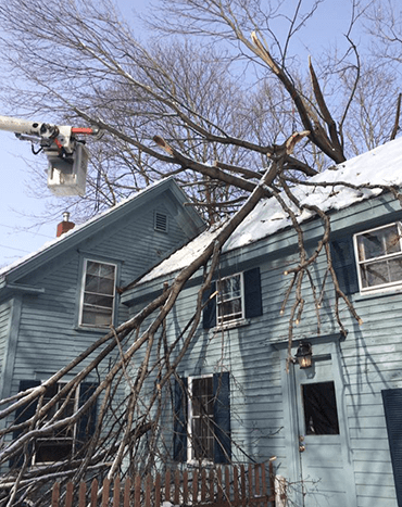 Capital Area Tree Service does storm damage clean up.